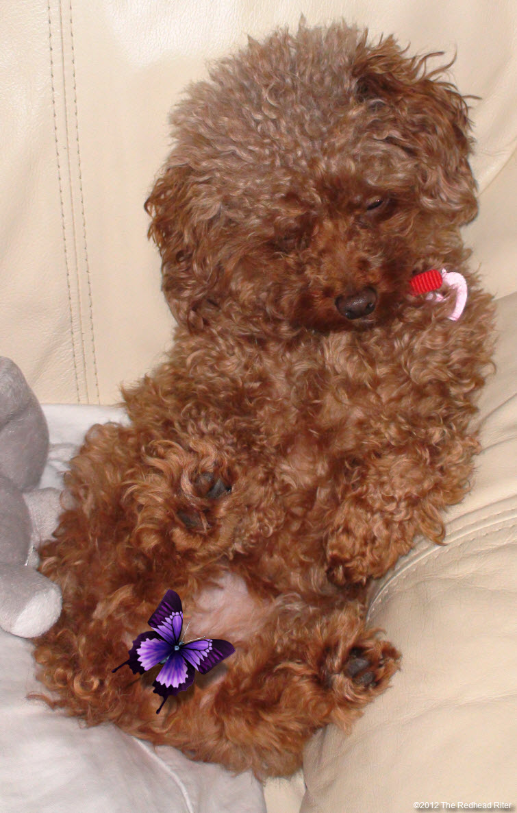 Bella sitting on couch - purple