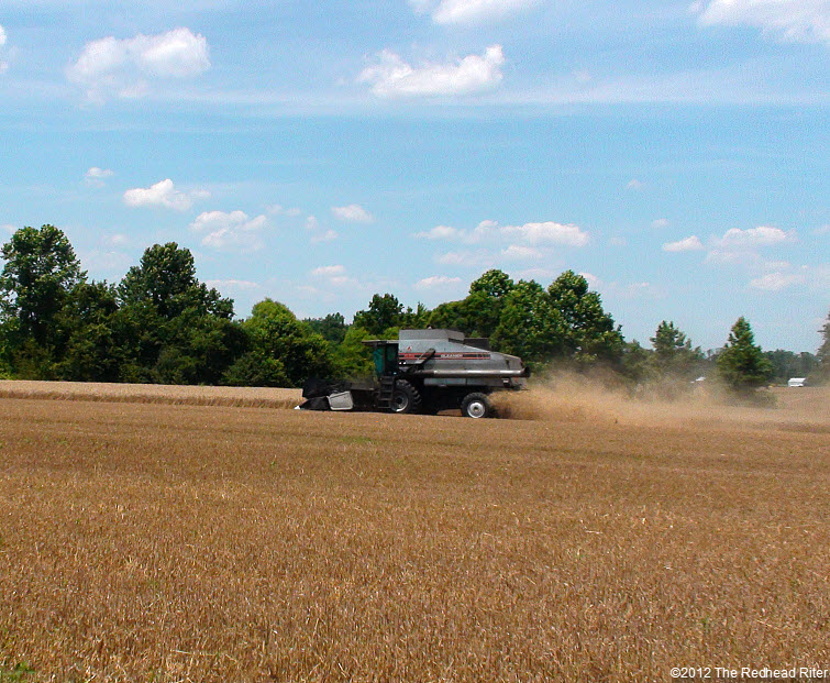 combine harvester harvesting wheat field 4