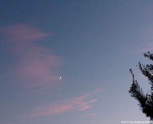 Fingernail Moon In A Pink And Blue Sky
