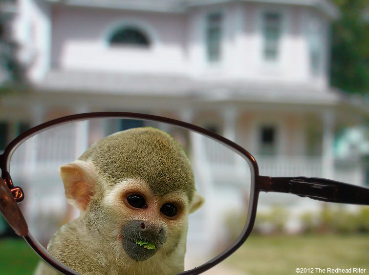looking through eyeglasses monkey