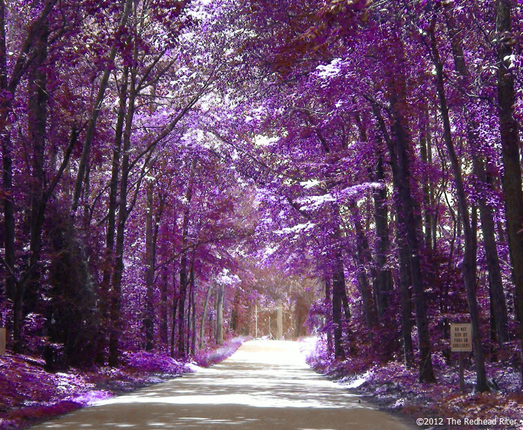 country road purple tree perspective