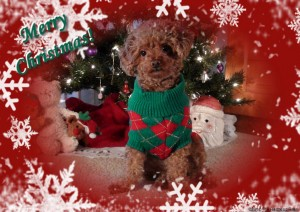Christmas Has Gone To The Dogs
