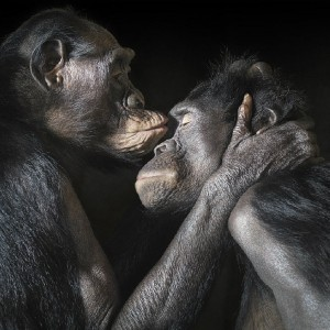 Tim Flach Photography With Amazing Creatures