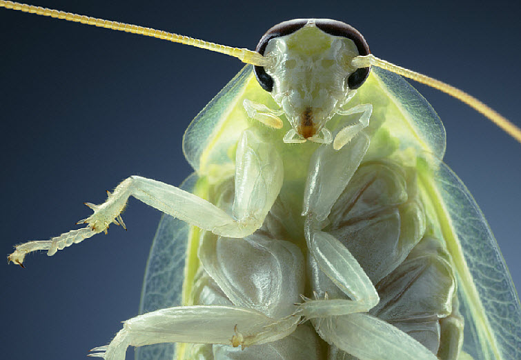 Tim Flach Photography praying mantis closeup