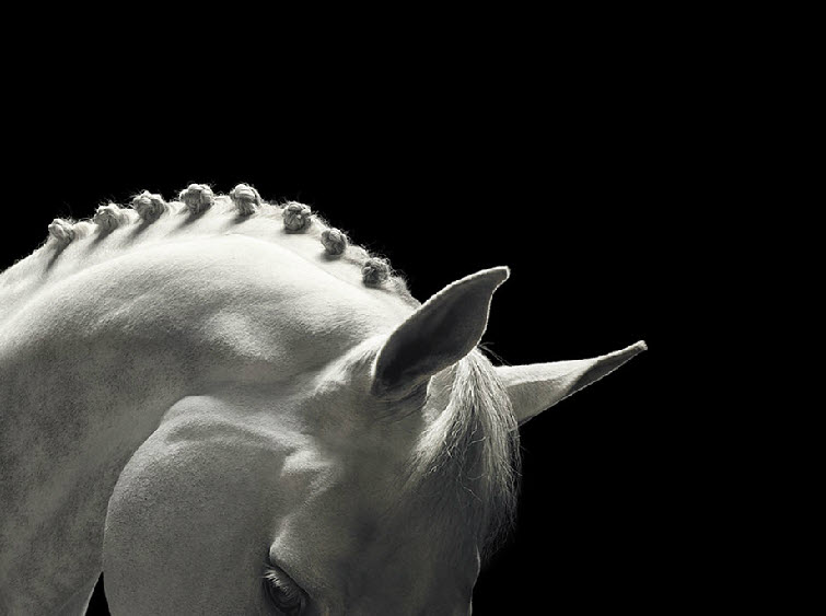 Tim Flach Photography white horse braided mane