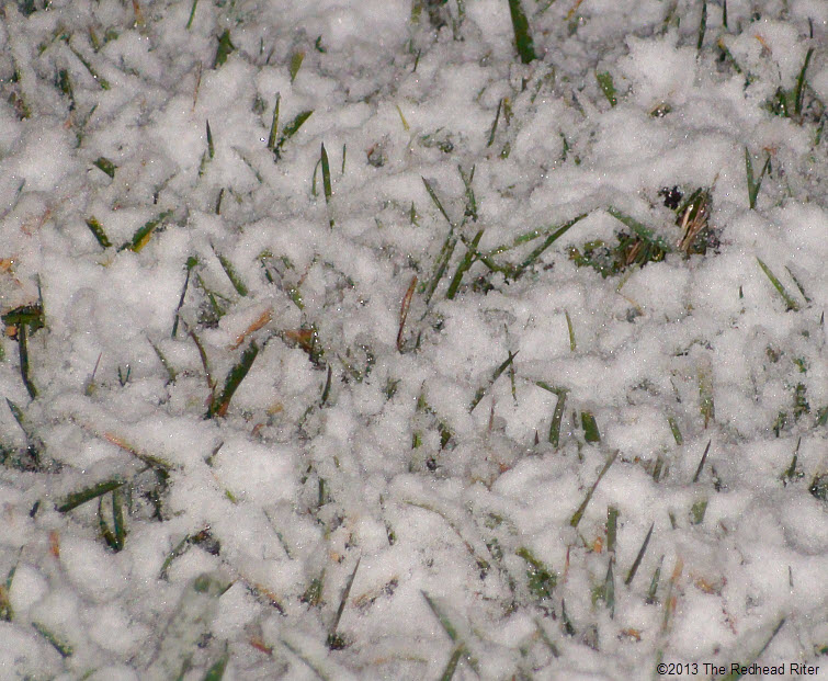 grass peeking out of snow