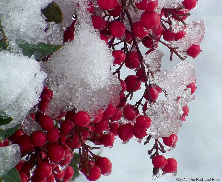 snow and ice on red berries