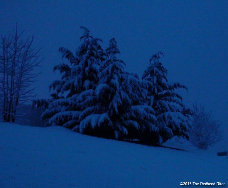 night snow covered tree blue