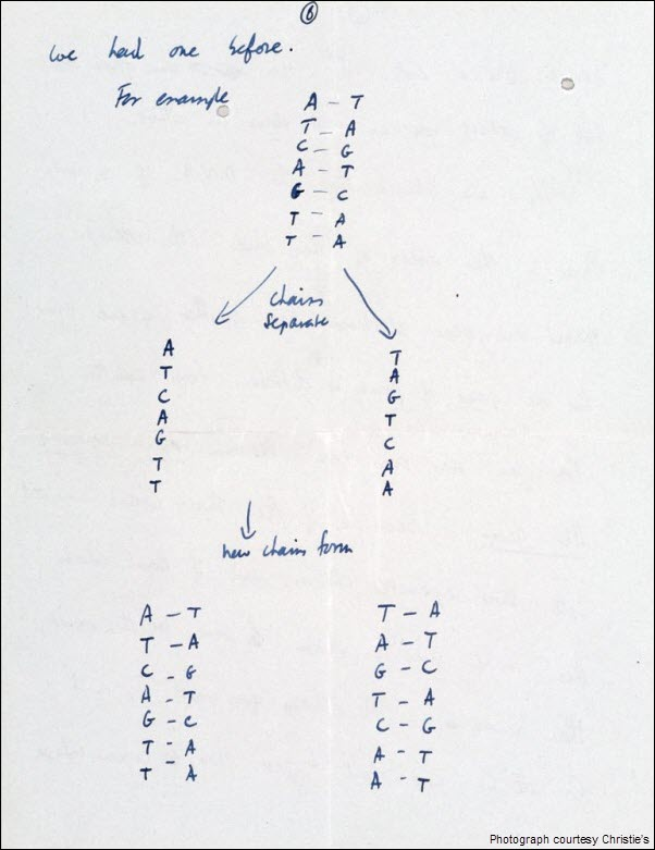 Francis Crick DNA Discovery Letter pg 6