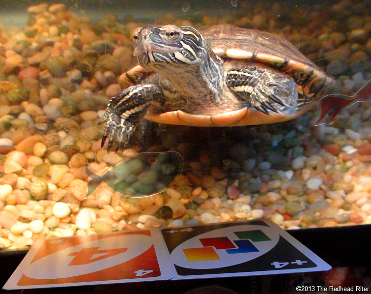 Turtle Western Painted Turtle 5