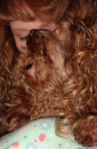 Bella, The Red Toy Poodle That Speaks