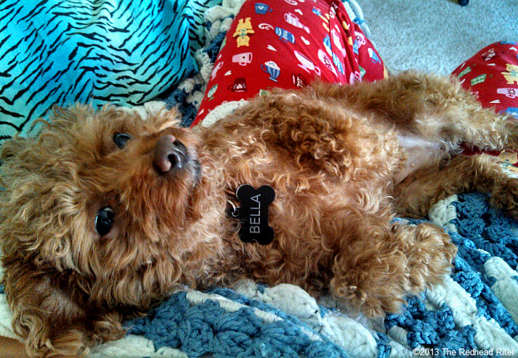 bella red toy poodle friend 3