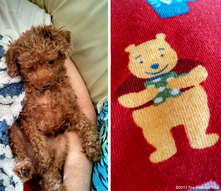 bella red toy poodle friend and pooh