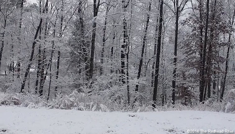 snowy forest richmond virginia