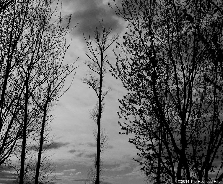 black and white trees sunset A Series Of Phases And Seasons