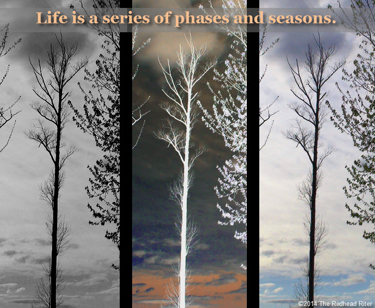 trees sunset A Series Of Phases And Seasons