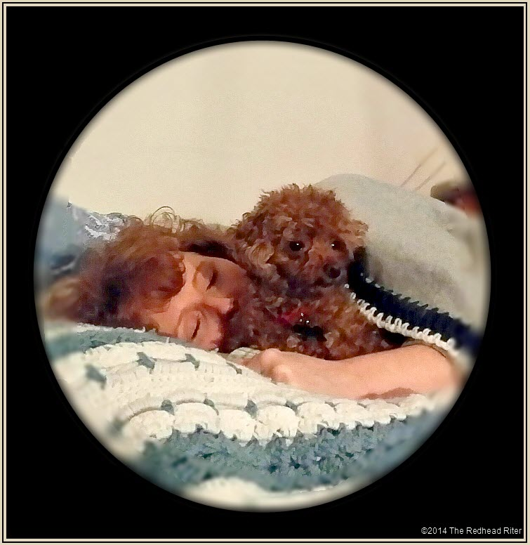 redhead sherry riter sleeping napping with toy poodle bella