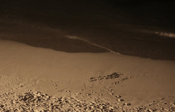 Thumbnail image for Listen To The Music Of The Night At The Beach And Stop Worrying