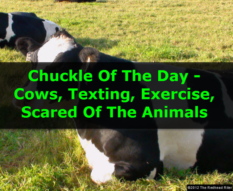 Chuckle Of The Day - Cows, Texting, Exercise, Scared Of The Animals 7 tw