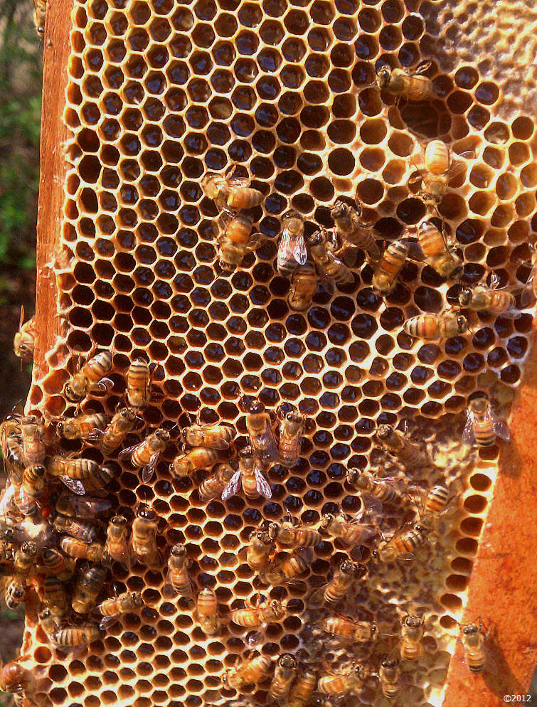 Busy As A Bee filling a honeycomb