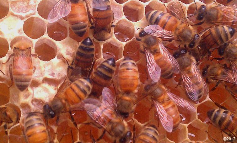 Busy as a bee buzzzzzzzz