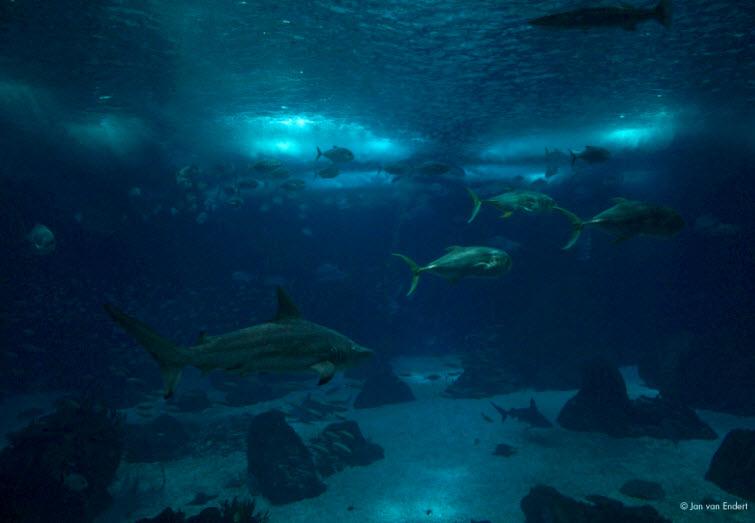 blue fish aquarium lighted wall