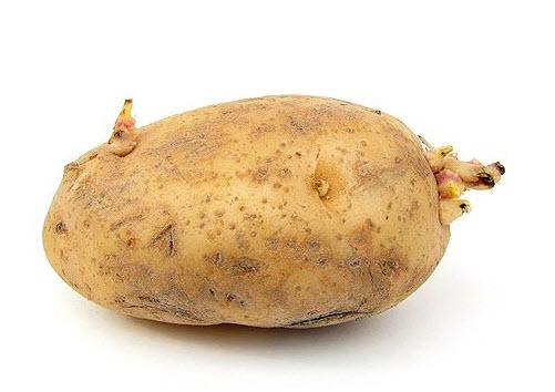 potato exercise chuckle funny joke