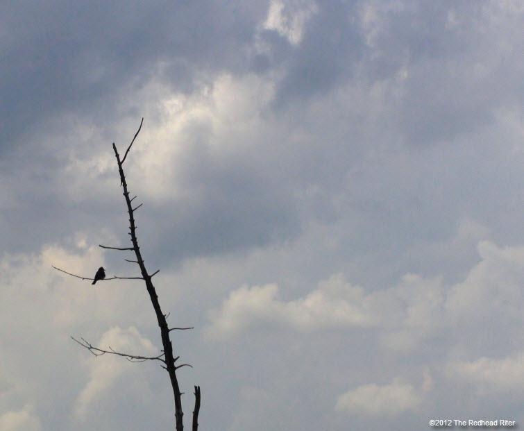 bird on branch white clouds 2