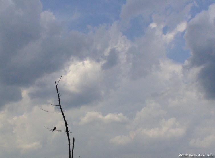 bird on branch white clouds 3