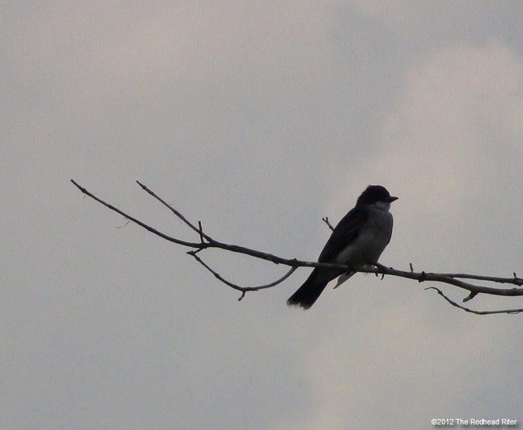 bird on branch white clouds 4