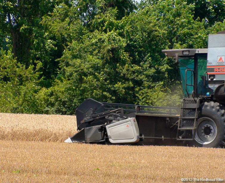 combine harvester harvesting wheat field 5