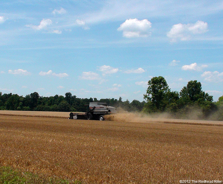 combine harvester harvesting wheat field 7