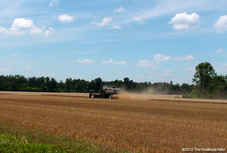 combine harvester harvesting wheat field 8