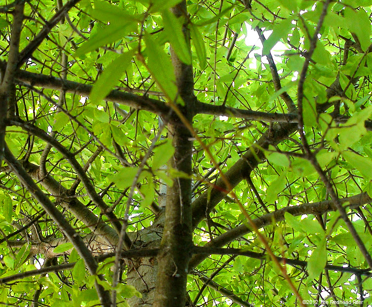 green leaves  rugged bark on tree 3