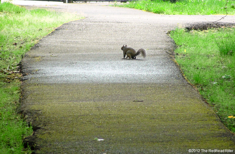 one squirrel walking on path