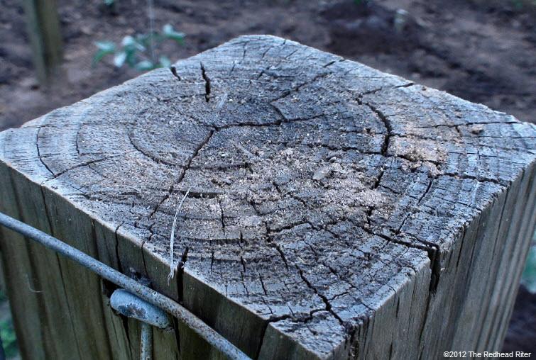tree rings aged cracked wood 2