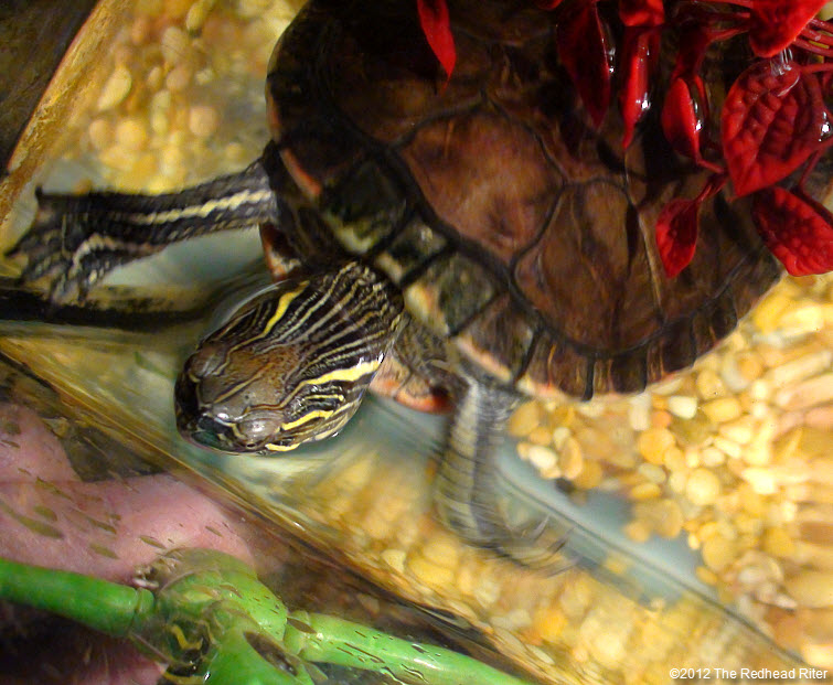 Turtle is focused on green alien