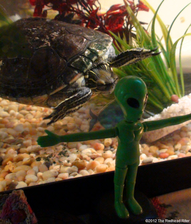 Turtle staring at the green alien