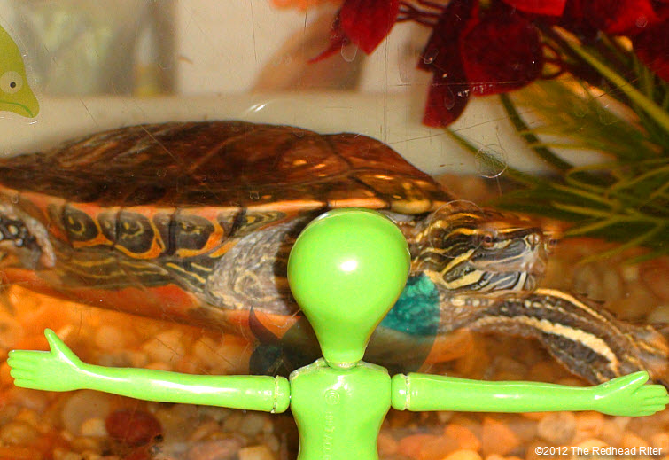 green alien staring at Turtle