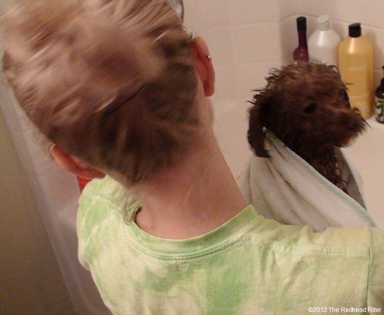 Bella red poodle bathtub bathing 8