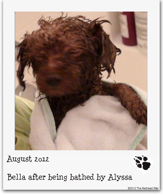 Bella red poodle bathtub bathing 9
