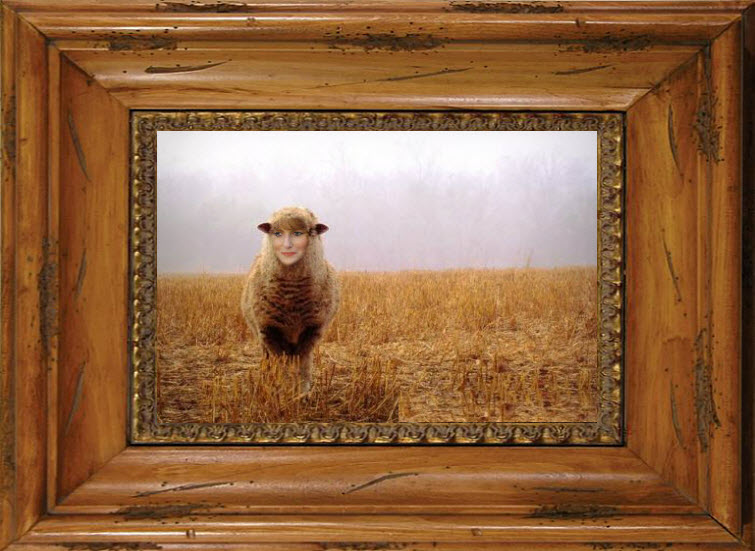 lamb dried wheat field redhead