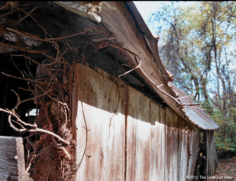 overgrown old wood farm shed