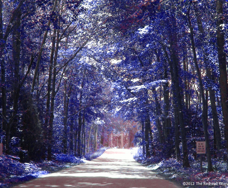 country road blue tree perspective