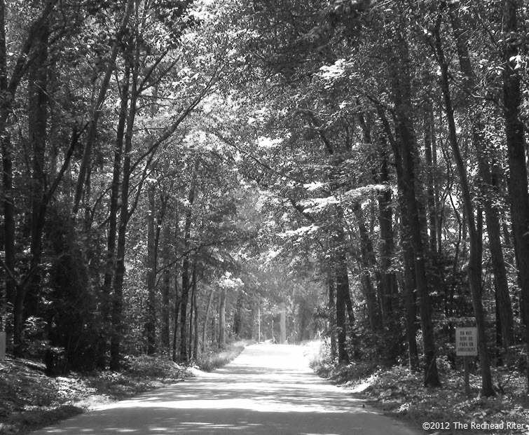 country road gray tree perspective