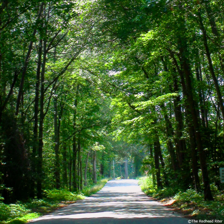 country road trees overhanging green