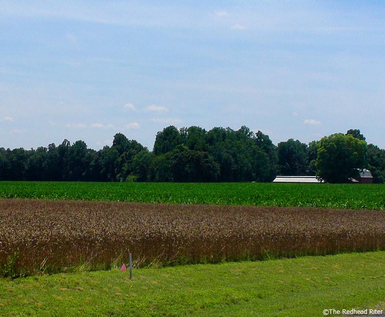 farm crop field green blue sky