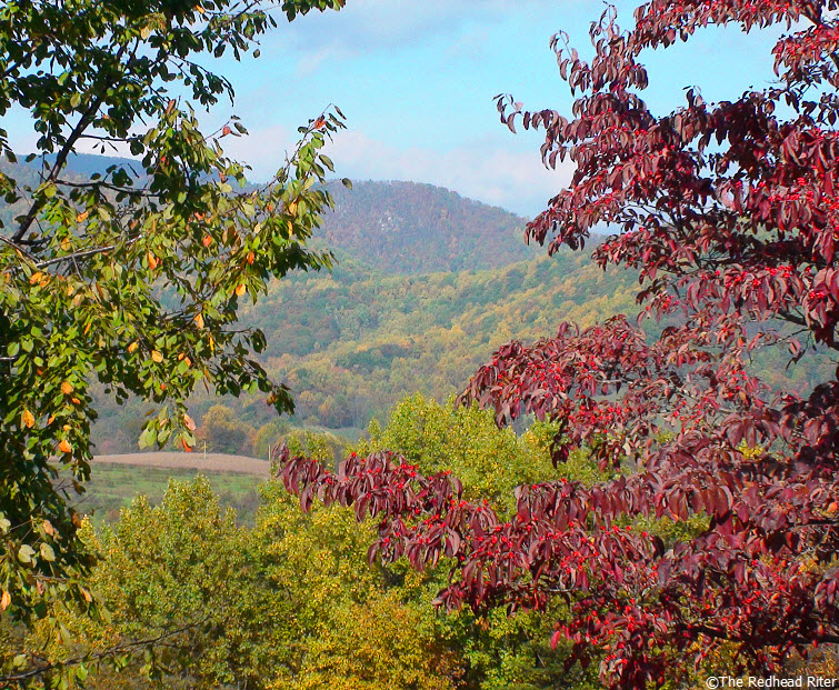 syria virginia fall leaves mountain red