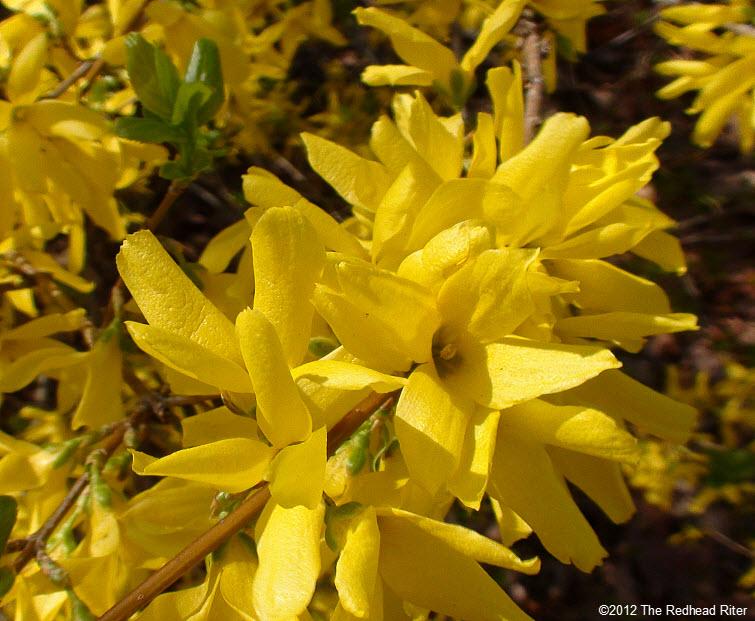 yellow flowers full bloom
