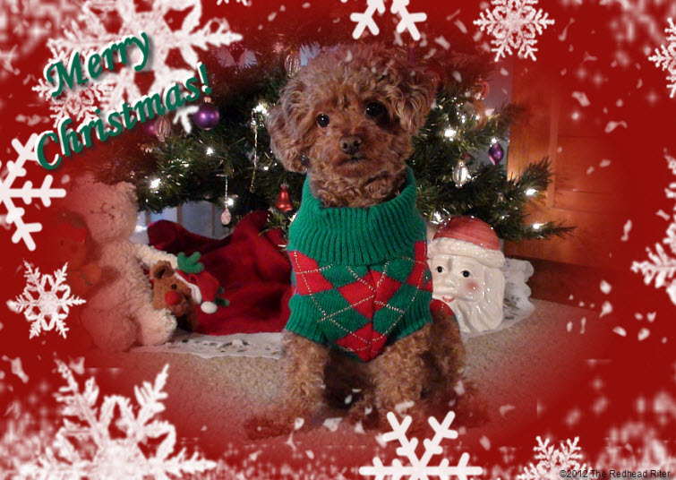 Merry Christmas Bella 2012